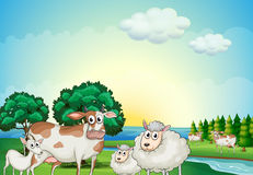Sheeps, cow and goat near the flowing river Stock Photography
