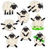 Sheeps. Cute cartoon set of sheeps Stock Images
