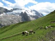 Sheeps in de bergen Royalty-vrije Stock Fotografie