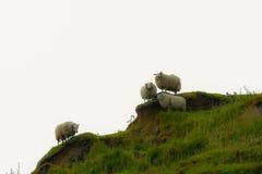 Sheeps in de Waterval van de Kiltrots Elishader Ellishadder Royalty-vrije Stock Afbeeldingen
