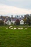Sheeps e la città Immagine Stock