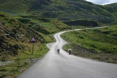 Sheeps en el camino en Escocia foto de archivo libre de regalías