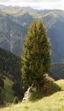 Sheeps en las montañas Imágenes de archivo libres de regalías