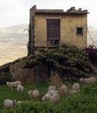Sheeps en oud huis Stock Foto