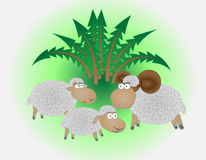Sheeps family Stock Image