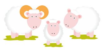 Sheeps family. On white background Royalty Free Stock Photos