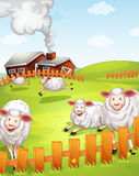 Sheeps in the farm. Illustration of sheeps in the farm near the house Stock Image