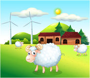 Sheeps at the farm with windmills Royalty Free Stock Images