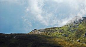 Sheeps feeding. Some sheeps are feeding in a highland in Bucegi Mountains stock photo