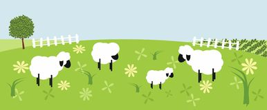 Sheeps flock Stock Photography