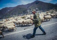 Sheeps in Georgië Royalty-vrije Stock Foto
