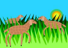 Sheeps in grass. Three sheeps in tall green grass under clear azure sky with sun on horizon Stock Images