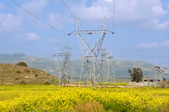 Sheeps grazing under power line Royalty Free Stock Photo