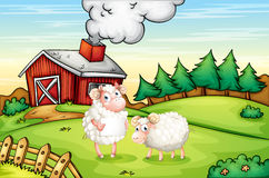 Sheeps at the hills with an empty signboard Royalty Free Stock Photo