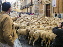Sheeps i Madrid Arkivfoton