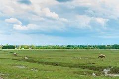 Sheeps i niebo Zdjęcie Stock
