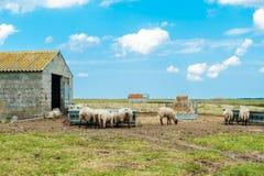 Sheeps i niebo Zdjęcia Royalty Free