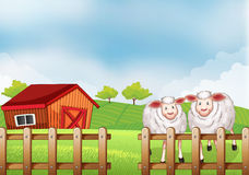 Sheeps inside the wooden fence with a barn Royalty Free Stock Photos