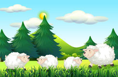 Sheeps living on the farmyard. Illustration Royalty Free Stock Photography