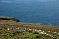 Sheeps on meadow with cloudy blue sky Stock Photo