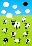 Sheeps on a meadow Royalty Free Stock Images