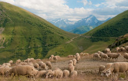 Sheeps on the mountains of Alpe d'Huez Stock Photos