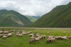 Sheeps in mountains Royalty Free Stock Photography