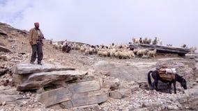 Sheeps on mountain. S of manali Royalty Free Stock Photo