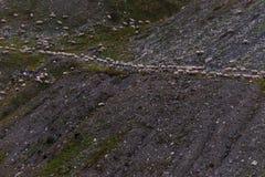 Sheeps na dolinie Zdjęcia Royalty Free