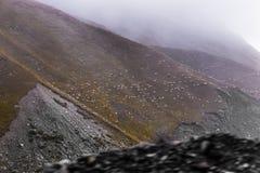 Sheeps na dolinie Zdjęcie Royalty Free