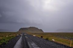 Sheeps na estrada fotos de stock royalty free