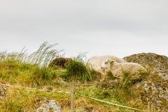 Sheeps na rockowym wzgórzu Zdjęcia Royalty Free