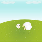 Sheeps on the nature. Sheeps on a green lawn Stock Photography