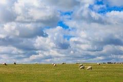 Sheeps near Stonehenge landscape England Stock Photography