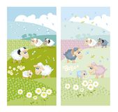 Sheeps On Green Hills With White Flowers Stock Image