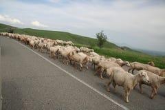 Sheeps op de weg Stock Foto's