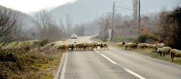 Sheeps op een weg in Macedonië Stock Afbeelding