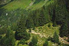 Sheeps op Heuvel Stock Afbeelding