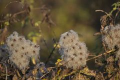 Wild flowers in autumn morning Royalty Free Stock Image