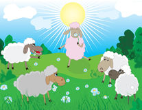 Sheeps in pasture Stock Photos