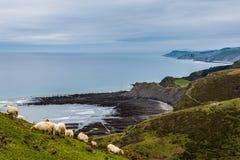 Sheeps pasturing in Zumaia coast Stock Photo