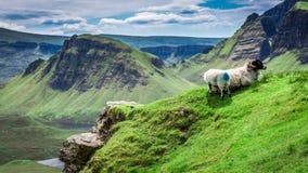 Sheeps in Quiraing, Scotland, UK Stock Photography