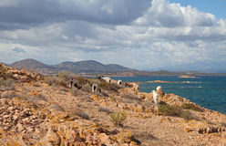 Sheeps on the rock. Stock Images