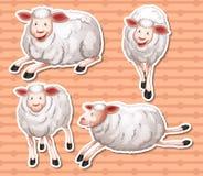 Sheeps set Stock Photos