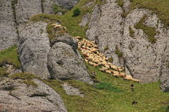 Sheeps and shepherds on high mountain Stock Photos
