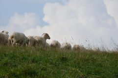Sheeps in the sky Stock Photo