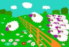 Sheeps Sprung über Zaun Stockbild