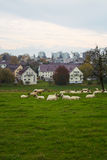 Sheeps und die Stadt stockbild