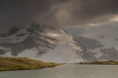 Sheeps under Matterhorn Stock Photos