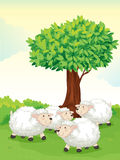 Sheeps under tree Royalty Free Stock Image